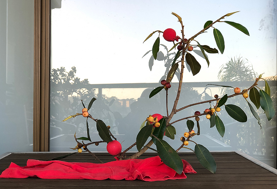 Sawling - After much trimming and eliminating leaves the end result allowed the reds of the balls (golf balls covered in red fabric) and the draped red fabric to draw attention to the red shine of the Morton Bay figs.